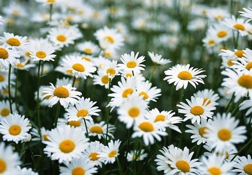 Đặc sản hoa