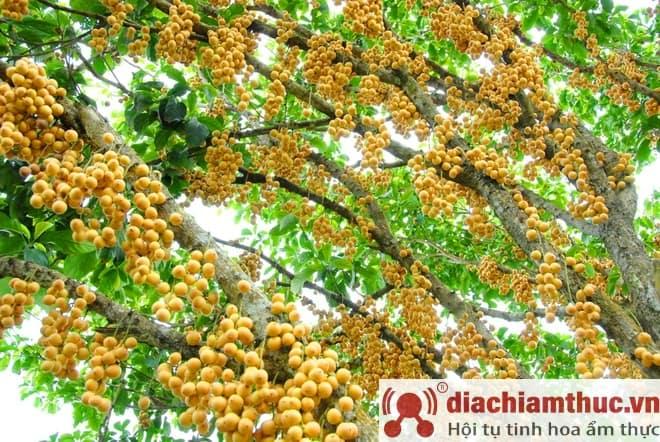 Dâu Hạ Châu Phong Điền
