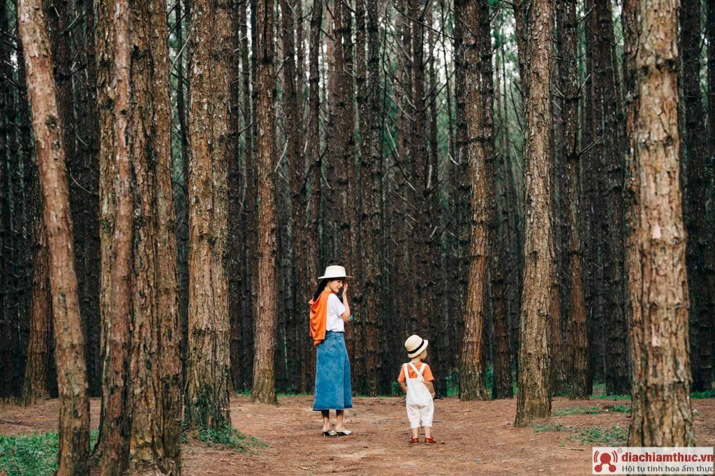 Kinh nghiệm du lịch Đà Lạt khi có trẻ con