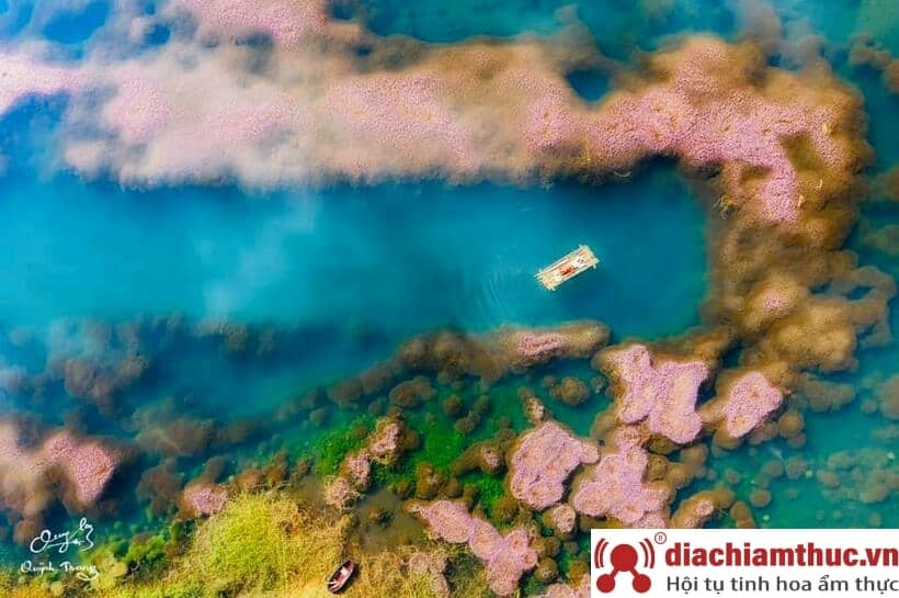 Hồ Tảo Hồng Lâm Đồng