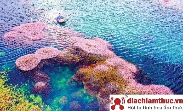 Hồ Tảo Hồng