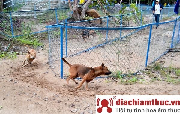 Trại chó Xoáy Phú Quốc