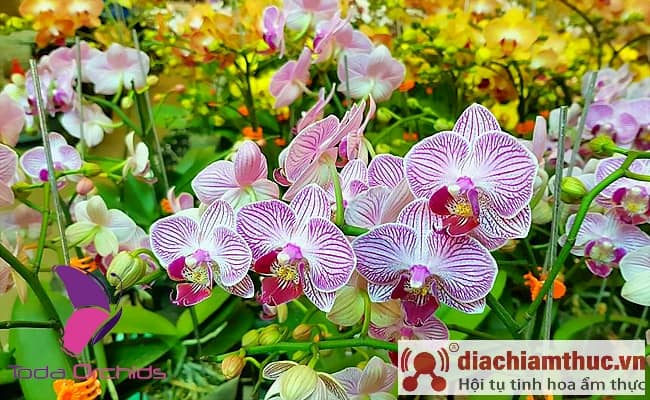Ngành hoa lan