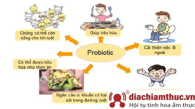 Lợi khuẩn tiêu hóa đường ruột trong sữa non