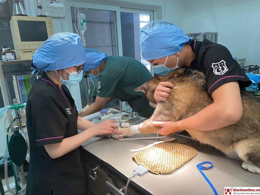 Bệnh Viện Thú Y Sasaki
