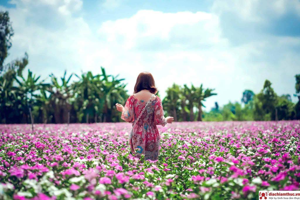 Cánh đồng hoa dừa cạn đẹp