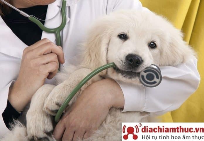 Phòng khám thú y uy tín chuyên nghiệp