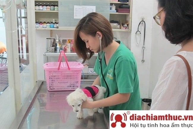 Phòng khám thú y uy tín nhất gần đây ở quận Gò Vấp