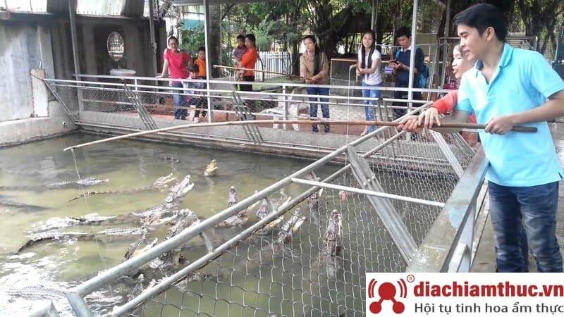 Trại cá sấu Long Xuyên - Vương quốc cá sấu