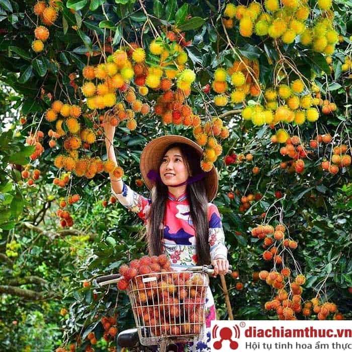 Vườn trái cây Út Phương