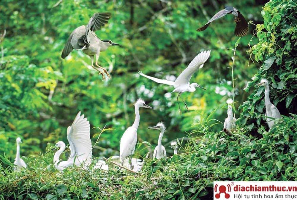 Những vườn chim nổi tiếng nhất ở Cà Màu
