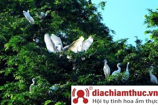 Vườn chim Tư Na Năm Căn