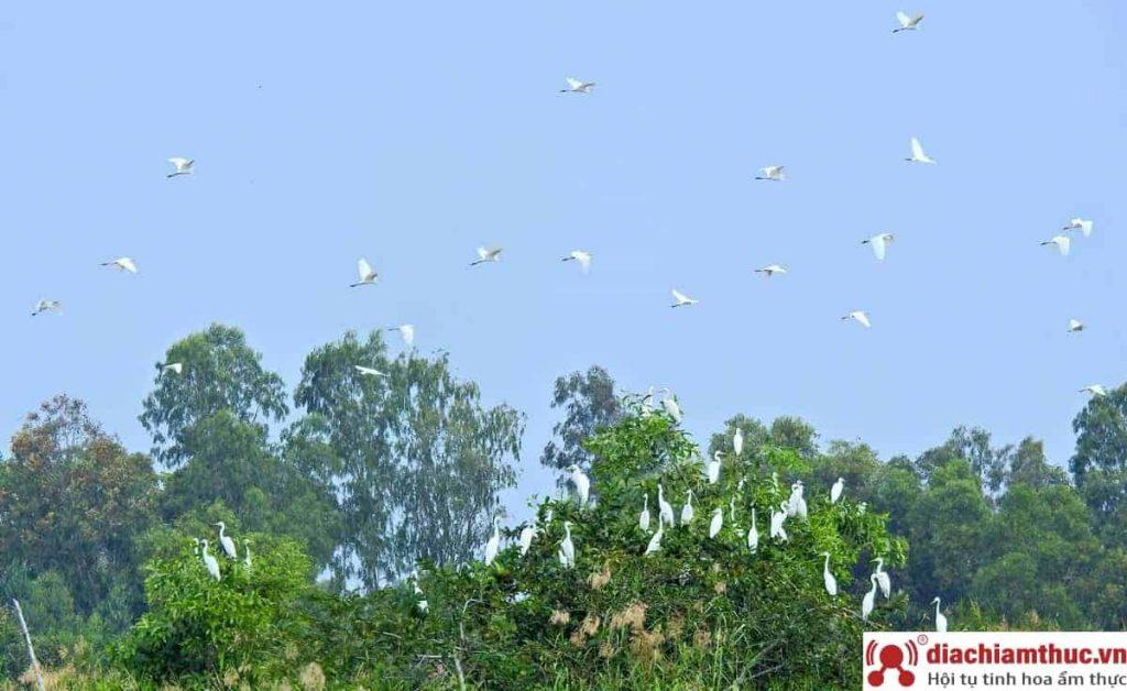 Vườn chim thành phố Cà Mau